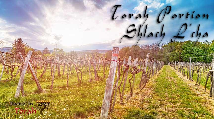 shlach-lcha-pic